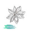 anise star hand drawn sketch isolated on white vector image