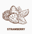 set of drawing strawberry hand draw vector image vector image