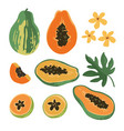 summer set with papaya and flowers isolated on vector image