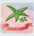 aloe vera plant cartoon icon vector image