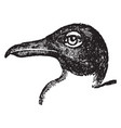 black headed gull vintage vector image vector image