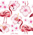 flamingo pink hibiscus plumeria white background vector image vector image