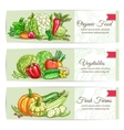 Organic vegetables sketch banner set design vector image vector image