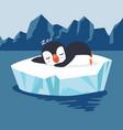 penguin sleep on ice floe vector image vector image