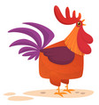 fat cartoon rooster vector image