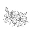 beautiful monochrome black and white bouquet lily vector image vector image
