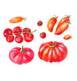 many different tomatoes watercolor set yellow vector image vector image