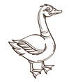 monochrome drake duck isolated on white background vector image vector image
