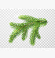 fir branch christmas tree pine needles isolated vector image vector image