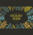 hand drawn culinary herbs and spices vector image vector image