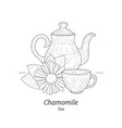 healing chamomile tea banner or card template pot vector image