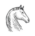 horse sketch farm animal steed vector image