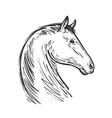 horse sketch farm animal steed vector image