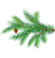 pine branch vector image