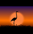 flamingo in sunset black silhouette vector image