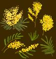 Mimosa hand drawn vector image