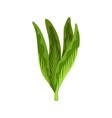 green fresh salad vegetable and herb organic vector image vector image