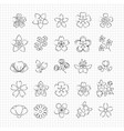 pencil drawing blossom flowers vector image