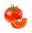 picture of tomato vector image vector image