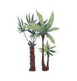 two tropical green palm trees with leaves vector image vector image