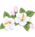 beautiful pink hibiscus flowers with leaves vector image