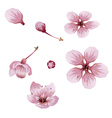 Cherry Blossom Flowers vector image vector image