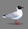 realistic bird seagull isolated on a grey vector image