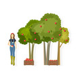 woman farmer collecting apple harvest fall vector image vector image