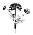 dill silhouette isolated on white vector image vector image