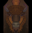 european brown zubr buffalo bison animal vector image
