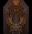 european brown zubr buffalo bison animal vector image