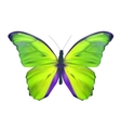Green Butterfly Isolated on White Realistic vector image