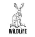 hand drawn deer with wildlife text isolated on a vector image vector image