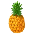 picture of pineapple vector image vector image