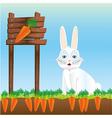 rabbit in harvest of carrots vector image vector image