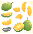 Set of durian in various styles format vector image vector image