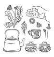 dandelion pharmacy application benefits ill vector image vector image