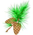 fir cones vector image vector image