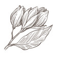 flower monochrome sketch outline floral plant vector image vector image