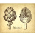 ink sketch of artichokes vector image vector image
