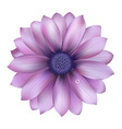 Lilac Flower With Water Drop vector image
