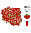 poland map composition of tomato vector image vector image