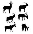 set antelopes vector image vector image