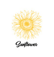 sunflower yellow blossom hand drawn vector image