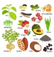 Vegetarian superfood healthy vegetable vector image vector image