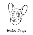 welsh corgi vector image