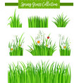 border set with green grass and flower vector image