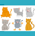 cats and kittens cartoon characters set vector image