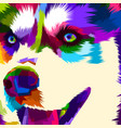 close up face husky vector image vector image