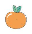 orange fruit fresh nutrition healthy food isolated vector image
